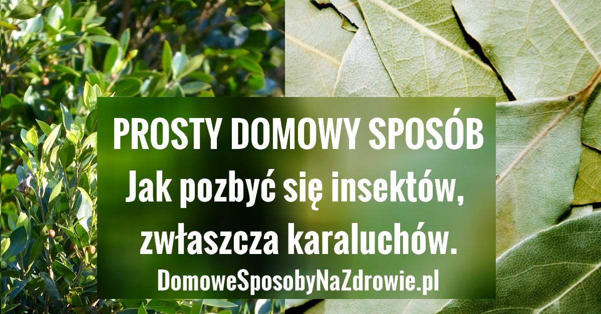 domowesposobynazdrowie.pl-liscie-laurowe-na-insekty