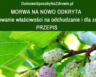 DomoweSposobyNaZdrowie.pl-morwa-biala-wlasciwosci