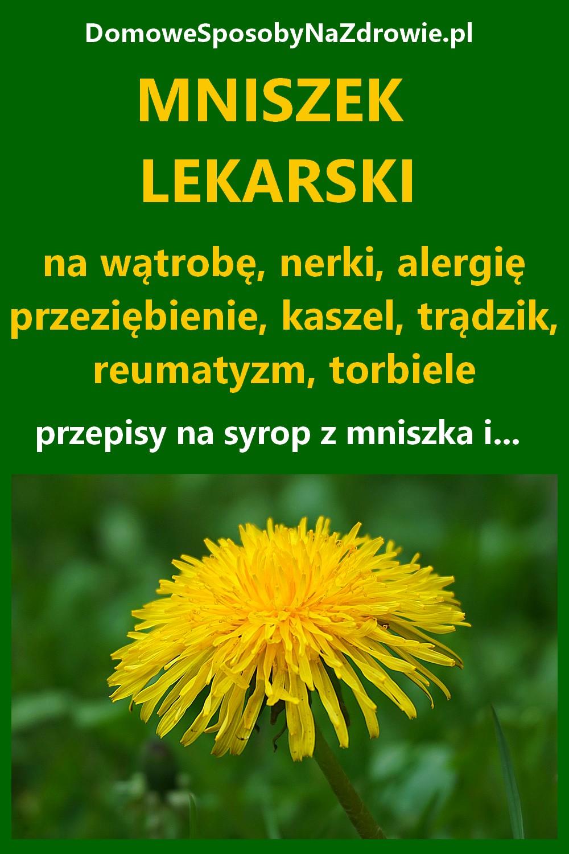DomoweSposobyNaZdrowie.pl-mniszek-lekarski