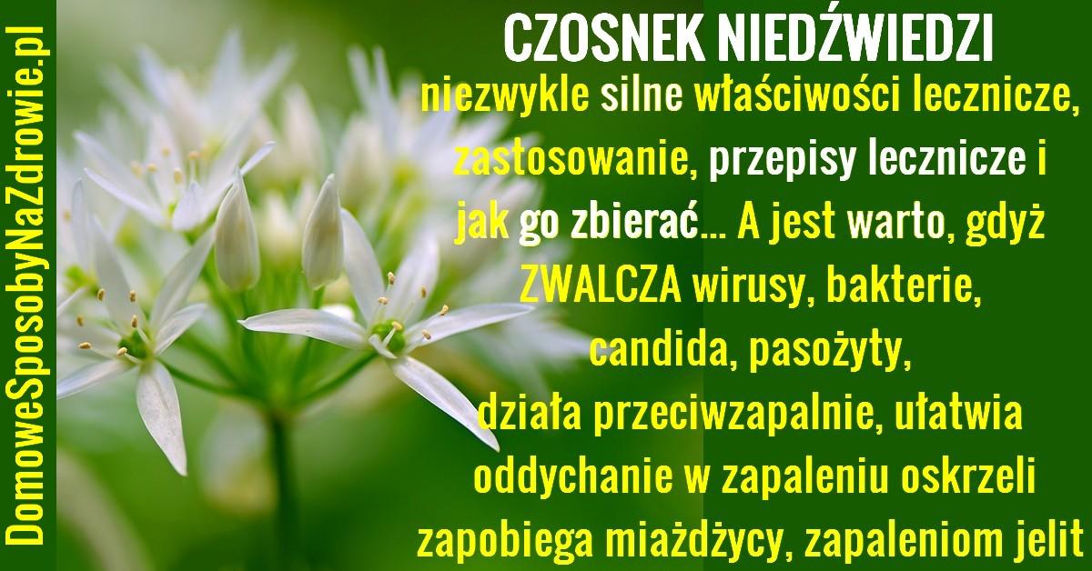 DomoweSposobyNaZdrowie.pl-czosnek-niedzwiedzi-domowe-sposoby-przepisy